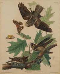 Lot 63: Audubon Print