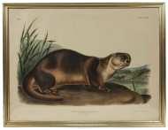 Lot 66: Two Audubon Prints