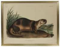 Lot 66: Two Audubon Prints